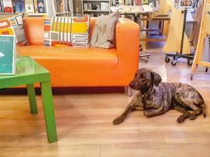 trebisonda dog